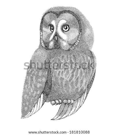 sketch owls drawn with pen and ink in a graphic style drawing points and lines. Beautiful figure for a tattoo - stock photo