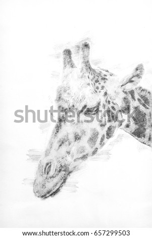 Sketch portrait t of a giraffe with sunlight