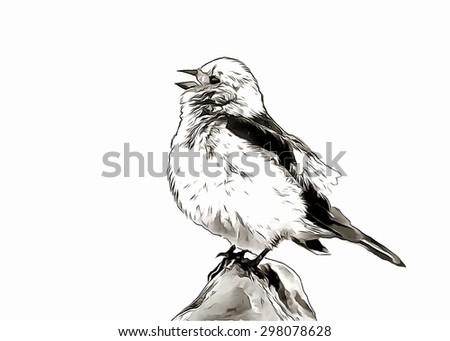 Sketch sparrow sing - stock photo