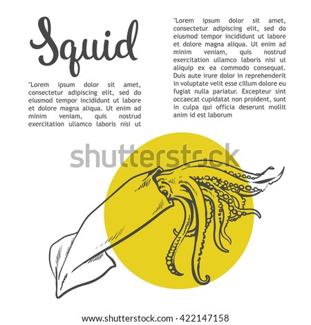 Sketch squid, illustration drawn by hand on a white background, isolated squid, sea food concept for the menu, advertising, sales brochures with information inscription lettering Squid - stock photo