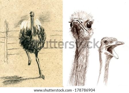 sketches of animals ostrich, camel-bird  - stock photo