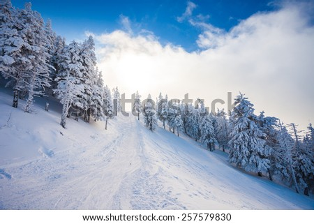 Ski forest path with pine trees covered in snow on winter season in Poiana Brasov, Romania - stock photo