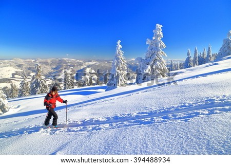 Ski touring on sunny slope surrounded by snow covered pine trees - stock photo