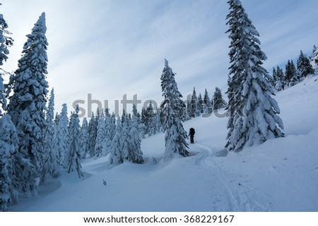 Ski tourists climb up among the snow-covered trees