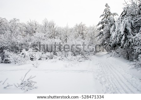 Ski track in snowy winter forest