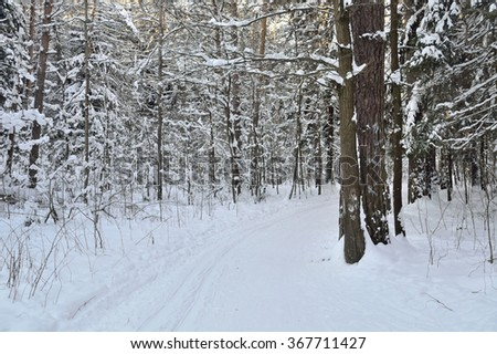 ski trail is put in a winter forest