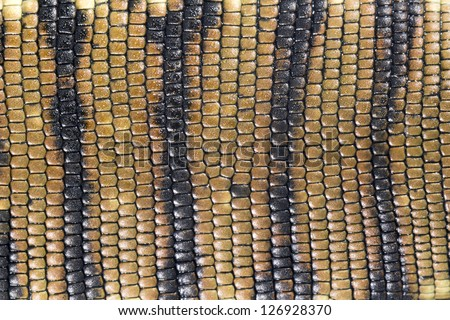 Skin of the Golden Tegu (Tupinambis teguixin) - stock photo