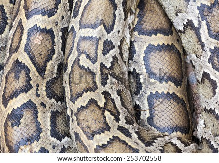 skin snake background - stock photo