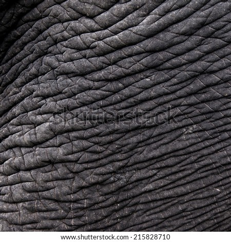 Skin texture of an elephant, close up. - stock photo