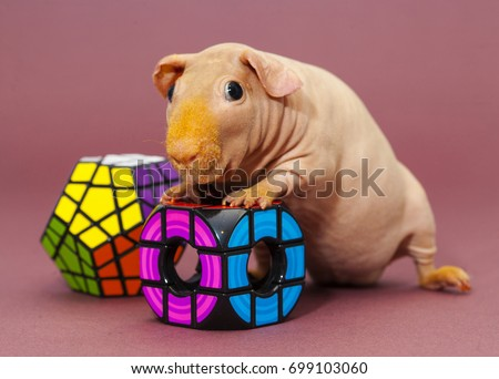 Ugly Pigs Stock Images, Royalty-Free Images & Vectors ...