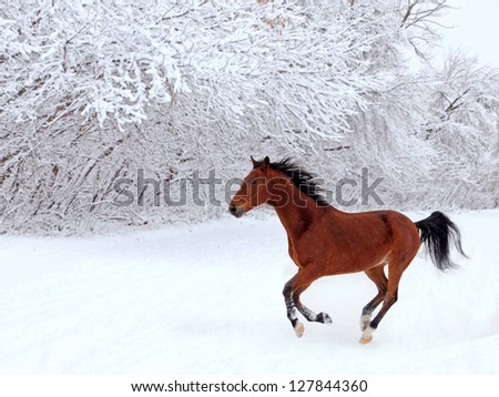 Skipping bay horse on a background of a snowfall and winter woods - stock photo