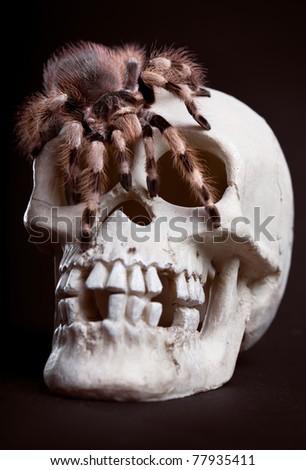 Skull and Tarantula Isolated On Black - stock photo