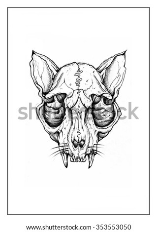 Skull cat - stock photo