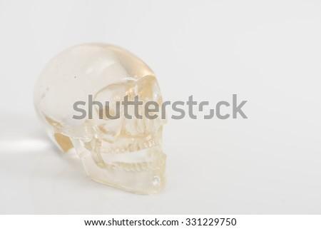 skull clear in Halloween - stock photo