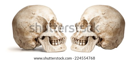 skull-close mouth. isolated on white background, with shadow - stock photo