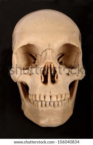 Skull Frontal - stock photo