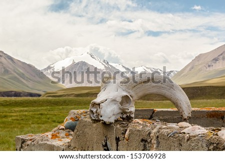 Skull gornoshl sheep, mountains in the background. Kyrgyzstan, Tien Shan - stock photo