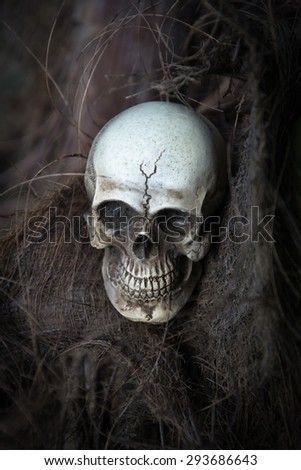 Skull into the wood background