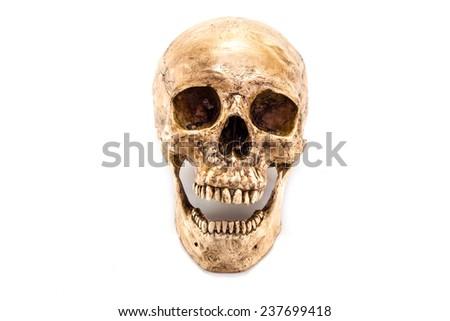 skull isolated on white background - stock photo