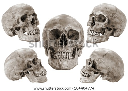 human skull different angles isolated stock illustration