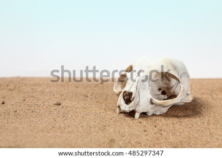 Skull of cat is half-buried in desert sand with place for text