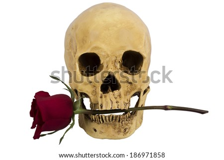 Skull of person with red rose in teeth - stock photo