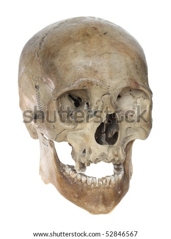 Skull of the person close-up on a white   background. - stock photo