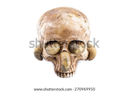 Skull on a white background. - stock photo