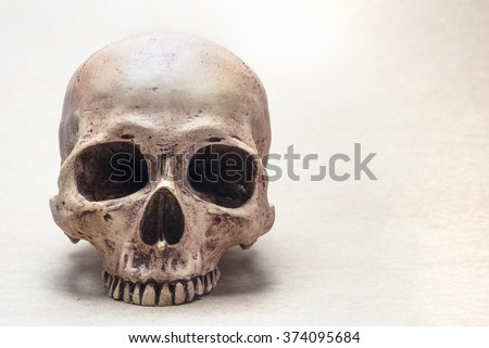 skull on brown vintage paper - stock photo
