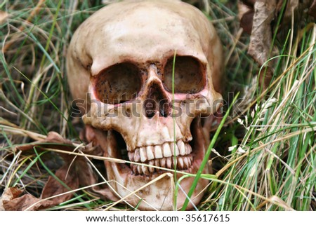 Skull sitting in grass and weeds