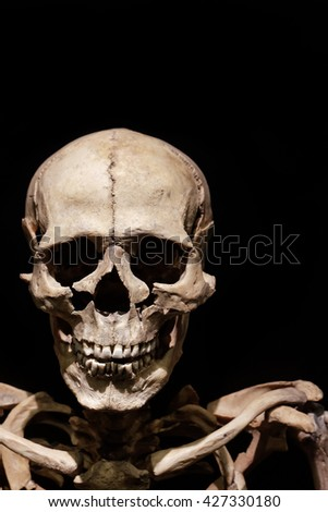 Skull Skeleton on black background - stock photo