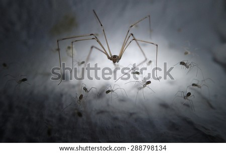 Skull spider with babies in the web  - stock photo