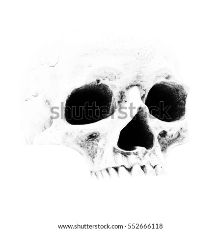 skull, white background