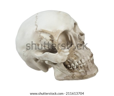 Skull with eye sockets and teeth and cranial lines - path included - stock photo