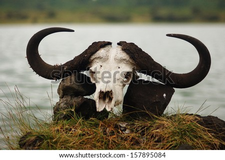 Skull with horns - stock photo