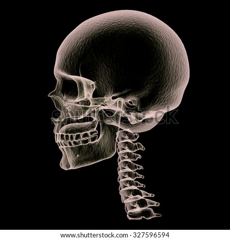 Skull x-ray side view,3D render art and illustration. - stock photo