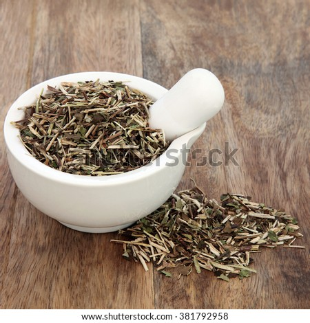 Skullcap herb used in natural alternative medicine in a mortar with pestle over old wood background.  - stock photo