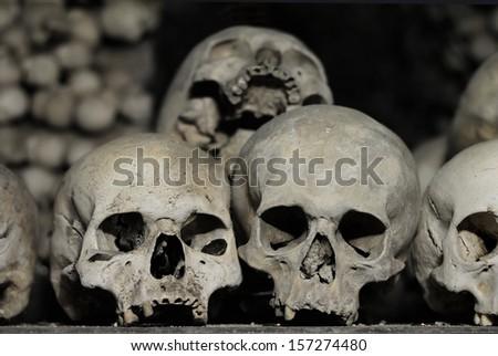 Skulls - stock photo
