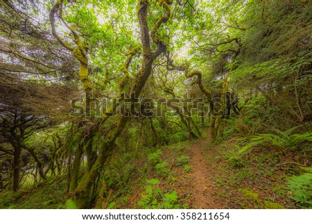 SKUNK CABBAGE TRAIL-redwood national and state parks
