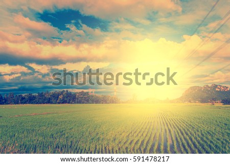 Sky and clouds background. Rice field with sunshine. Retro vintage filter effect.