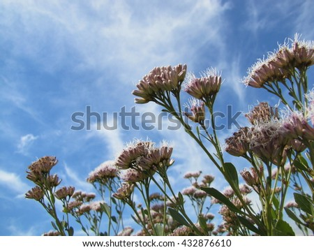 Sky Blue and Flowers - stock photo
