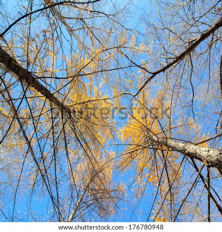 sky in birch forest with wide angle lens - stock photo