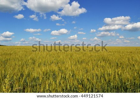 sky nature cloud cloudscape scene beauty photo - stock photo