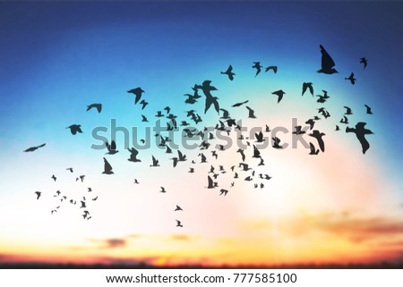 Sky with clouds and birds silhouette
