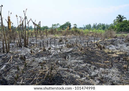 Slash and burn cultivation in the country of Thailand - stock photo