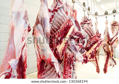 slaughterhouse cows, hanging on hooks in the cold half of cows - stock photo