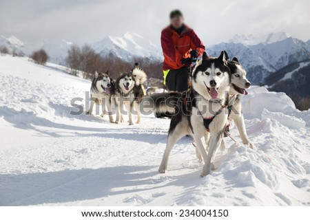 Sled dog racing alaskan malamute snow winter competition race - stock photo