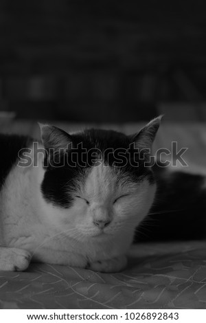 sleep black and white cat