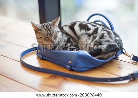 Sleep cat on the bag - stock photo