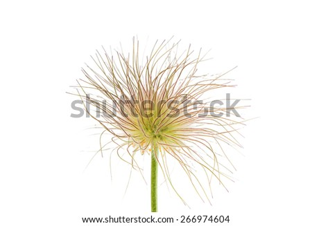 sleep grass on a white background - stock photo